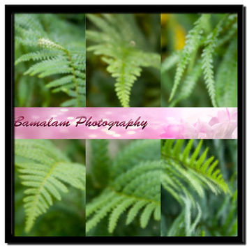 Green Fern Instant Download, Digital Scrap Book Paper, Backgrounds, Printable Woodland Art, Photoshop Overlays