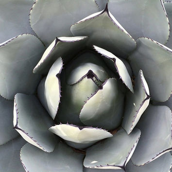The Cactus | Fine Art Photography | Landscape Photography | Botanical | Green | Gray | Symmetry | Oregon Garden