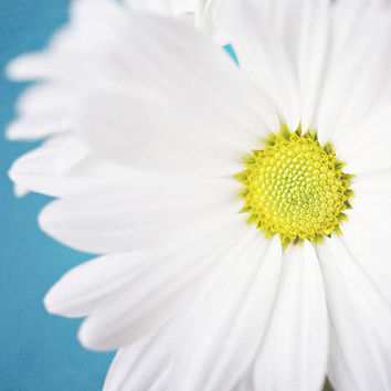 Dreamy White Flower Photograph Bright by LisaRussoPhotography