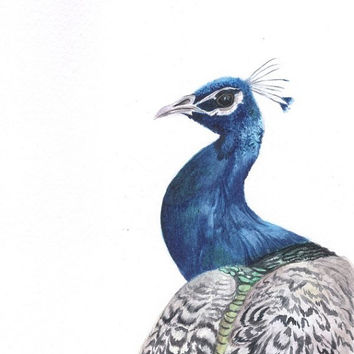 Blue Peacock Watercolor Painting