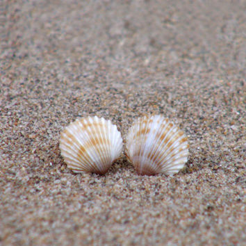 Small Tiny Seashell Earrings - Small Stud Earrings - Natural Seashells - Ear studs - everyday earrings - childrens jewelry - git idea