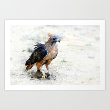Hungry Red Teiled Hawk Art Print by Henrik Lehnerer