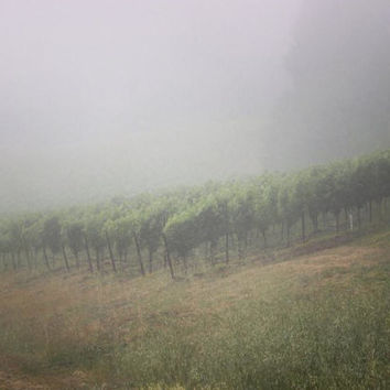 Boheme Vineyards | Landscape Photography | Nature Photography | Vineyards | Fog | Mist | Wine Country | California | Fine Art Photography