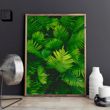 fern print, fern photography, fronds wall art, tropical plant poster, rainforest photograph, green decor, fern leave poster, fern wall print