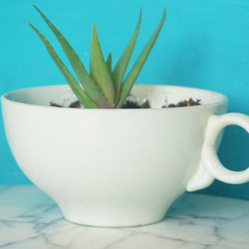 Vintage Sea Foam Tea Cup-Succulent Planter