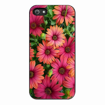Daisies flower for Iphone 5 Case *NP*