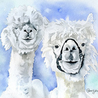 Alpacas Watercolor Giclee Print 11 x 14 Reproduction - Fine Art