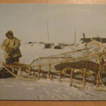 Vintage Eskimo Sled And Dogs Alaska Postcard