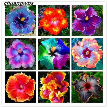 100 PCS Giant Hibiscus Flower Seeds Hardy ,rare home flower for DIY Garden potted or yard flower plant best gift for girl kid