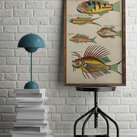 Fish Poster| Sea Life Art| Taxonomy Wall Art| Fishes Wall Art| Fishes Print| Animal Poster| Natural History| Vintage Zoology| HAP017