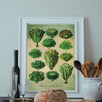 Kitchen Print Kitchen Decor Lettuce Art Rustic Farmhouse Giclee Print on Cotton Canvas and Paper Canvas Poster Home Wall Art
