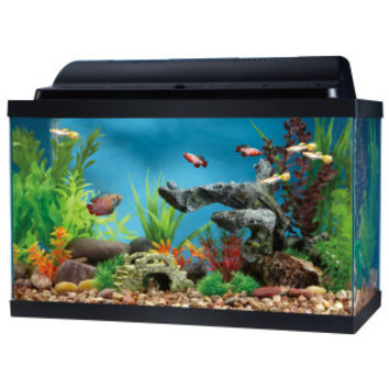 Top Fin 10 Gallon Hooded Aquarium | Aquariums | PetSmart