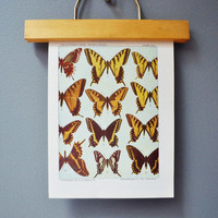 Vintage Butterfly Book Plate - Yellow and Orange