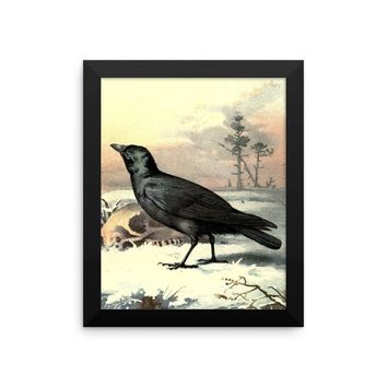 Curious Carrion Crow Vintage Art Poster