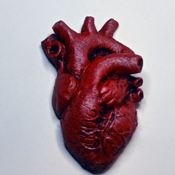 Anatomical Heart Magnet