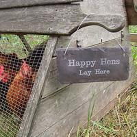 Slate Chicken Shed Sign
