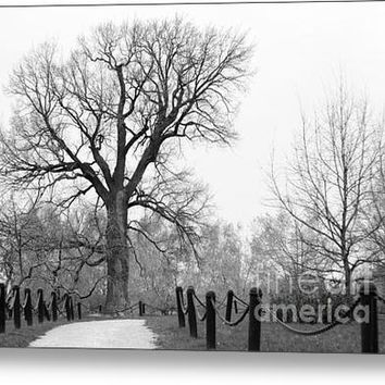 Centenary Oak Canvas Print / Canvas Art By Konstantin Sevostyanov
