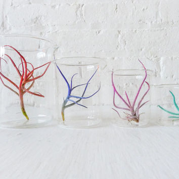 Color Air Plant Beaker Garden - The Chemical Color Garden Creepz Collection- small size 50mL