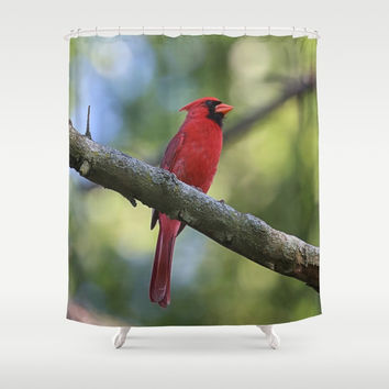 Cardinal Series I Shower Curtain by Theresa Campbell D'August Art