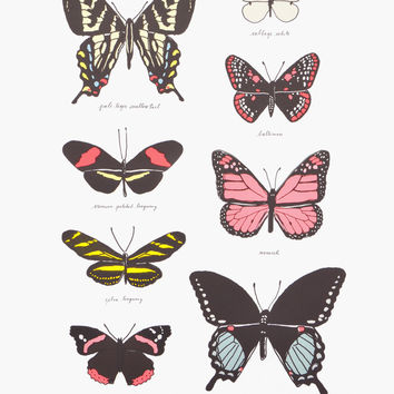 Butterfly Study Print