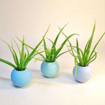 Miniature Round Wood Planters Artificial Air Plants Fairy Garden Dollhouse Set of Three in Hues of Blue