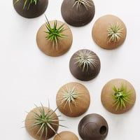 Customized Set of Wall Planters MADE TO ORDER.  Wall Planters Unglazed for Air Plants in Chocolate and Hazelnut Clay Bodies.