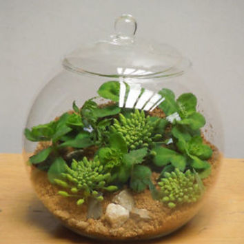 Glass Terrarium Container Bell Jars with Cover (Large)