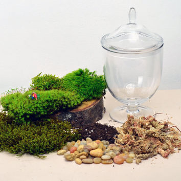 DIY Terrarium kit  // Live Moss // Little People // Glass Apothecary Jar // Indoor Garden // Home Decor // Gift Ideas