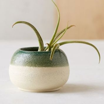 Haley Ann X UO Micro Sand Pot Planter- Green One