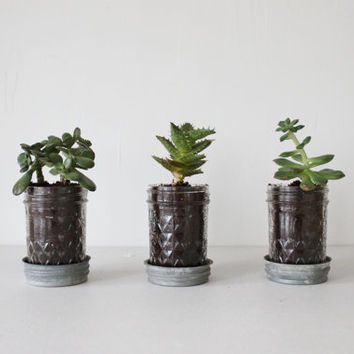 Mason Jar Planters with drainage  set of 3  UpCycled by BootsNGus