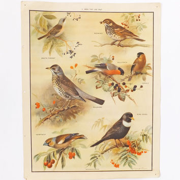 Vintage Birds Poster - Birds That Like Fruit School Poster, Home Decor, Paper Ephemera, Wall Hanging, Macmillans School Chart