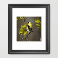 Goldfinch in Song Framed Art Print by Christina Rollo | Society6