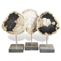 PETRIFIED WOOD TRIO