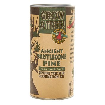 Ancient Bristlecone Pine | Tree Seed Grow Kit | The Jonsteen Company