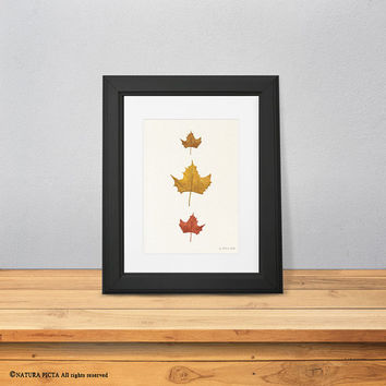Maple leaf print-leaves print-watercolor maple leaf print-fall print-autumn print-nature art-botanical print-home decor- NATURA PICTA-NPWP10