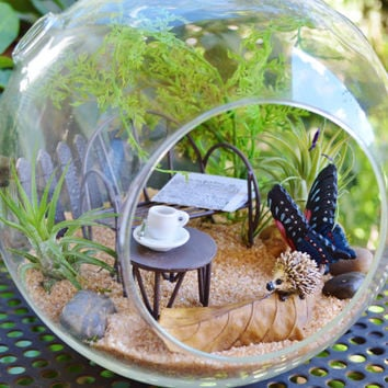 Hedgehog on a leaf Terrarium  Kit~ Large Glass Terrarium ~ 2 Tillandsia Air Plants ~ Sand and Butterfly choice ~ Gift Idea ~ Mother's Day