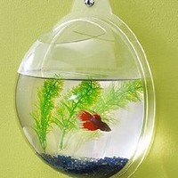 Amazon.com: Wall Mount Fish Bowl Aquarium Tank Beta Goldfish: Pet Supplies