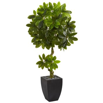 5.5' Schefflera Artificial Tree in Black Wash Planter UV Resistant (Indoor/Outdoor)