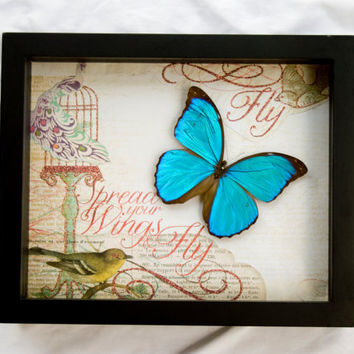 FREE SHIPPING  Real Blue Morpho Butterfly Encased in 9X11X3 inch Shadow Box