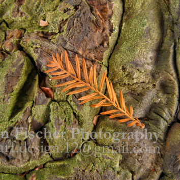 Cypress Tree Photo, Rust Colored Frond on Mossy Wood, Nature Photography, Metallic Print