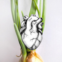 Alternative anatomical heart brooch