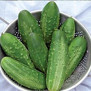 Russian Pickling Cucumber Heirloom Garden Seed Naturally Grown Open Pollinated