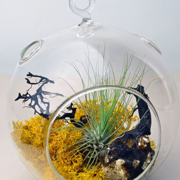 Hanging glass orb terrarium with air plant, sea fan, and yellow reindeer moss