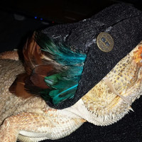 Pirate Hat for Bearded Dragons