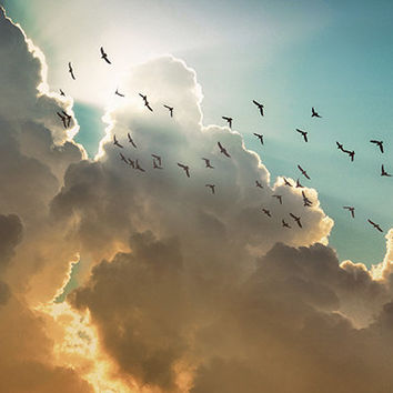 Storm Clouds, sunbeams, birds, blue green yellow orange, nature photography, inspirational God beams, Free US shipping