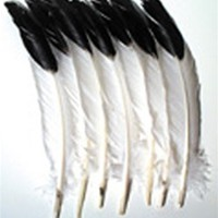 Imitation Eagle Feathers CK-4512