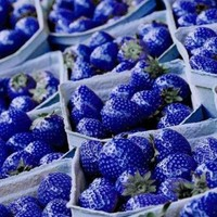 100 Strawberry Seeds - Jewel Blue - Treasures By Lee Copyright Jewel Blue