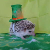 Lily's St. Patricks day top hat