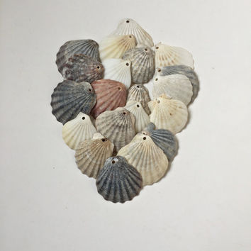 Drilled Sea Shells/ Drilled Shells/ Top Drilled Shells/ Natural Shells/ Seashell Pendants/ Natural Shell Pendants/ Beach Finds/ Set of 20