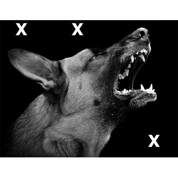 Angry dog on dark background -  High Detail Airbrush Stencil